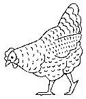 coloring pages chickens