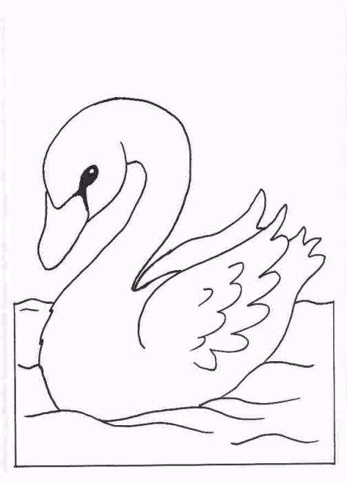 swan coloring pages for kids - photo#42